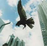MUCC - Tonan no Hoyoku DVD (Japan Import)