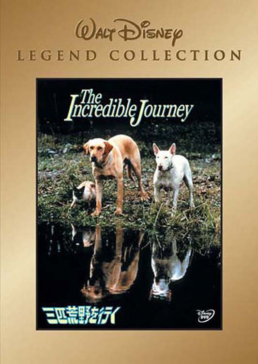 Download the incredible journey 1963